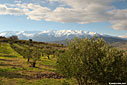 An olive grove and the White Mountains