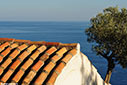 A church roof and olive tree overlooking the sea