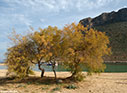 Tamarisk trees on Stavros beach