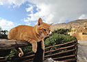 Cat on a fence in Preveli