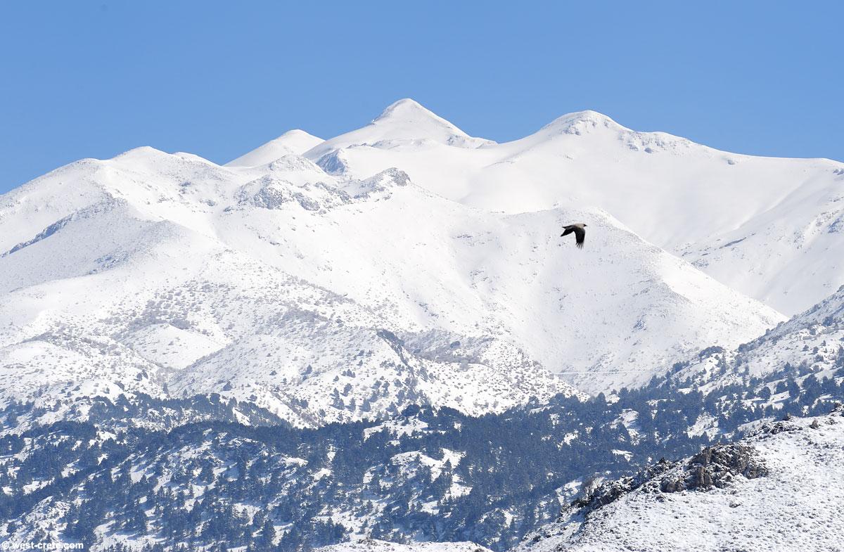 The White Mountains seen from Laki