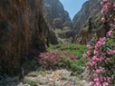 In the gorge of Aradena
