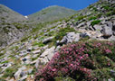 Spring in the Cretan mountains