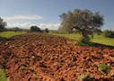 Red earth of Crete