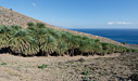 Cretan palm forest of Agios Nikitas