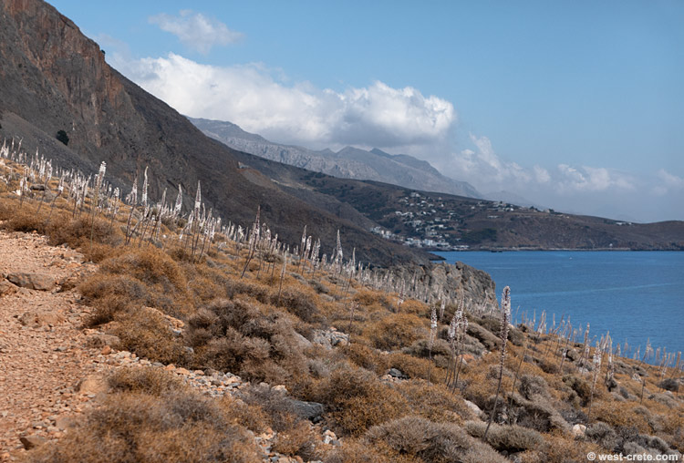 On the path between Loutro and Sweet Water Beach -  click on the image to enlarge