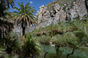 The Preveli palm forest