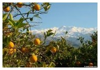 Orange grove and the White Mountains