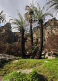 The palm forest of Preveli - January 2011