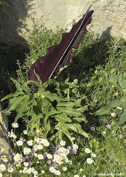 http://www.west-crete.com/flowers/photos/dracunculus_vulgaris-1.jpg