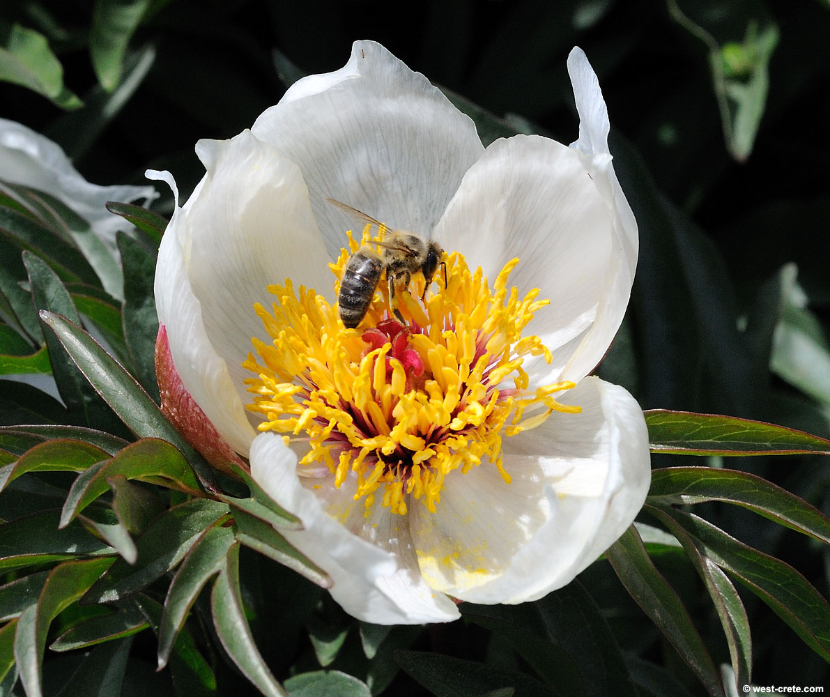 Best Flowering Bushes