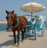 Horse-drawn carriage in Chania harbour. Strictly for tourists now, horse-drawn carriages were used as taxis in Chania until the late 1960s.
