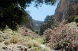 Late May and June is the best time to walk in the gorge of Aradena because the oleander is in full bloom