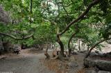 Plane trees at a rest stop in the gorge of Agia Irini