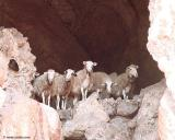 Sheep in the shade of a cave