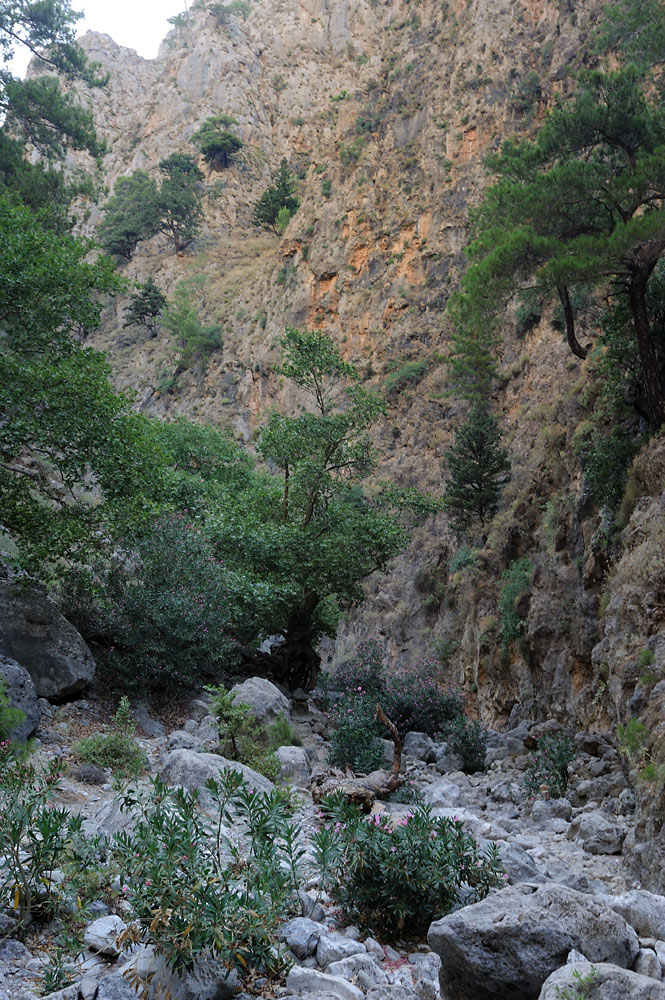 The gorge of Agia Irini, Crete